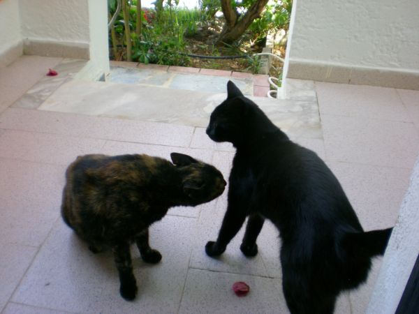 [Bild: Karpathoscats.jpg]