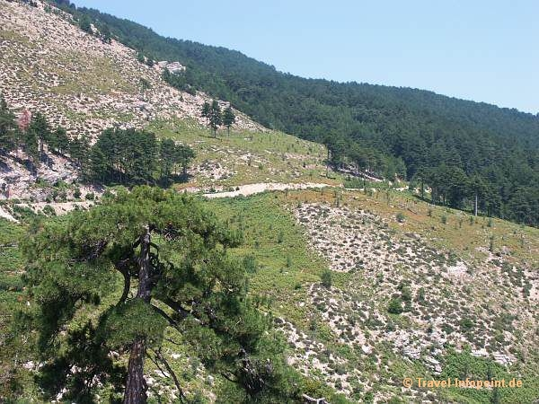 Fahrt zum Ipsarion, Thassos